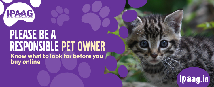 buying a kitten safely banner