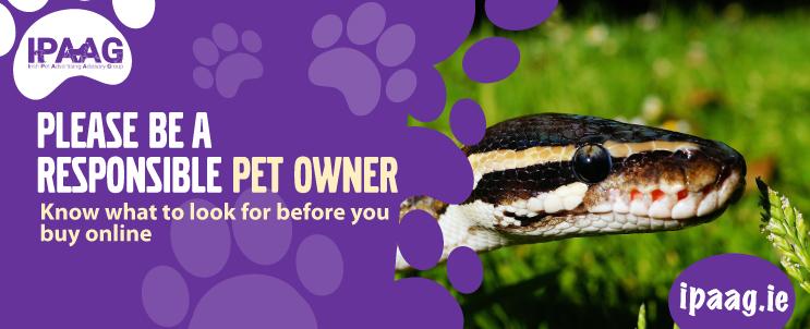 buy exotic pets online